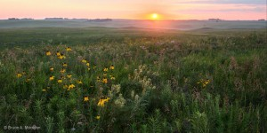 Prairie at sunrise. Bruce A. Morrison
