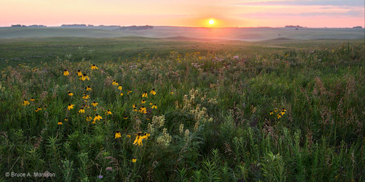 Sunrise over native Iowa prairie.  B. Morrison
