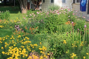 Front yard prairie. Photo by GV.